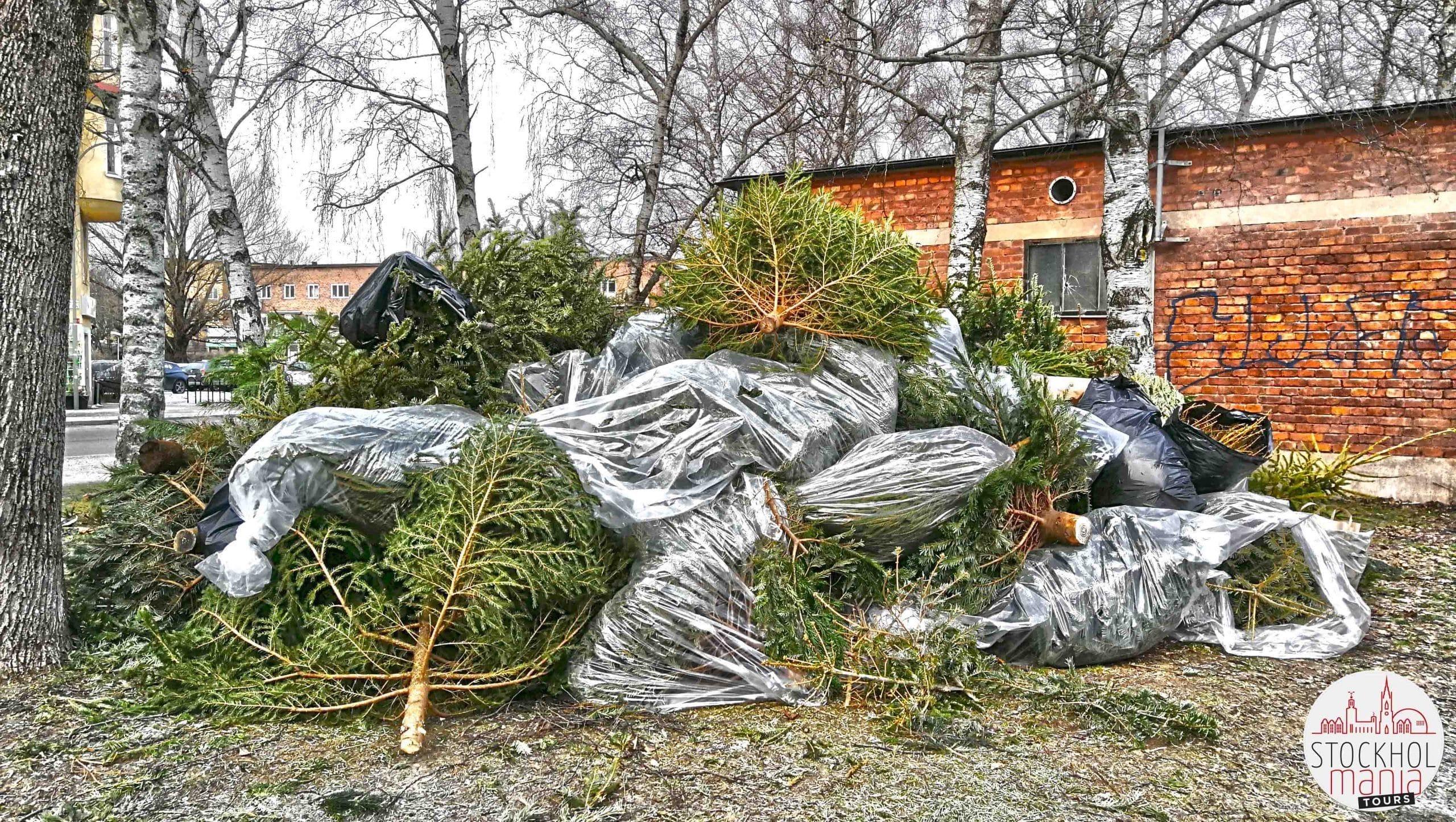 Gennaio - Il cimitero degli alberi di Natale 4